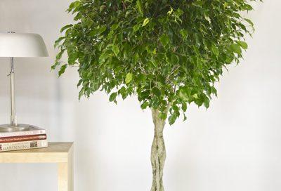 9 Indoor Plants That Improve Indoor Air Quality