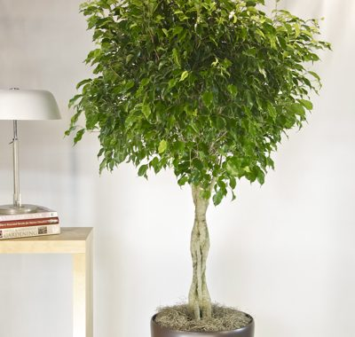 9 Indoor Plants That Improve Indoor Air Quality