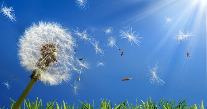 Suffering from seasonal allergies